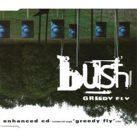 Greedy Fly - Bush