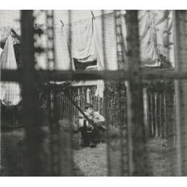 Chaos And Creation In The Backyard - Paul McCartney