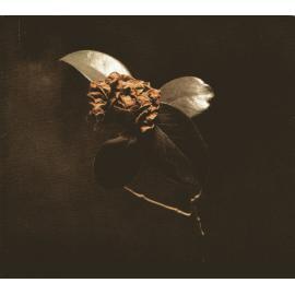 Young Sick Camellia - St. Paul & The Broken Bones
