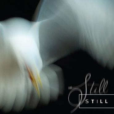 Still - Aria Rostami