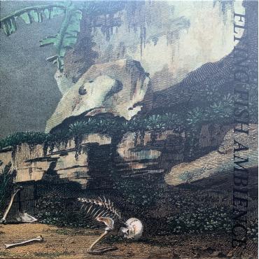 Flying Fish Ambience - Rainforest Spiritual Enslavement